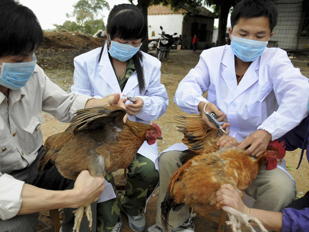 Bird Flu - A Fatal Disease