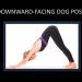 Downward - Facing Dog Pose