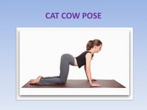 Cat-Cow Pose