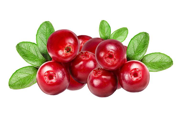 cranberries.png