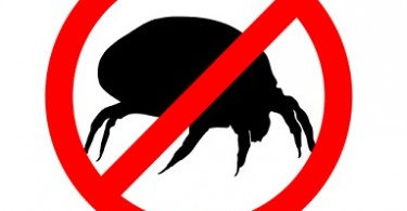 Dust Mite Allergy
