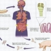 Tapeworm Infection