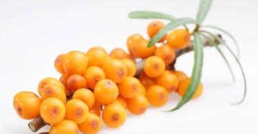 Buckthorn Berry