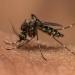 Malaria drug effectiveness hit by under-dosage