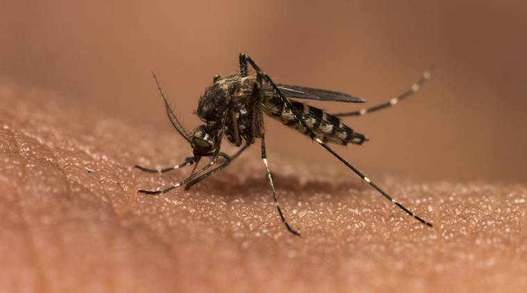 Malaria drug effectiveness hit by under-dosage