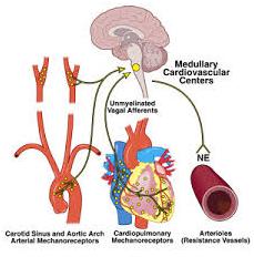 Neurocardiogenic Syncope