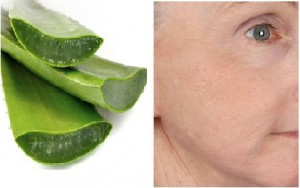 Aloe-Vera-Gel-for-Anti-Aging