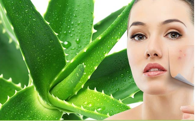 Aloe-Vera-Gel-for-Acne
