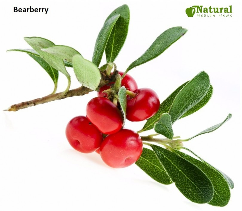 Bearberry-Herbs