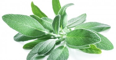 Sage - Natural Health News