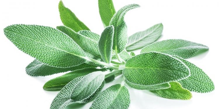 Sage - Natural Health News